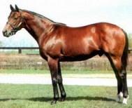caballo_0