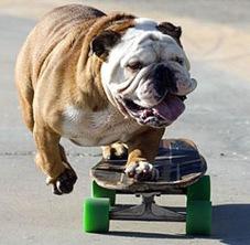 skateboarding_dog_1s
