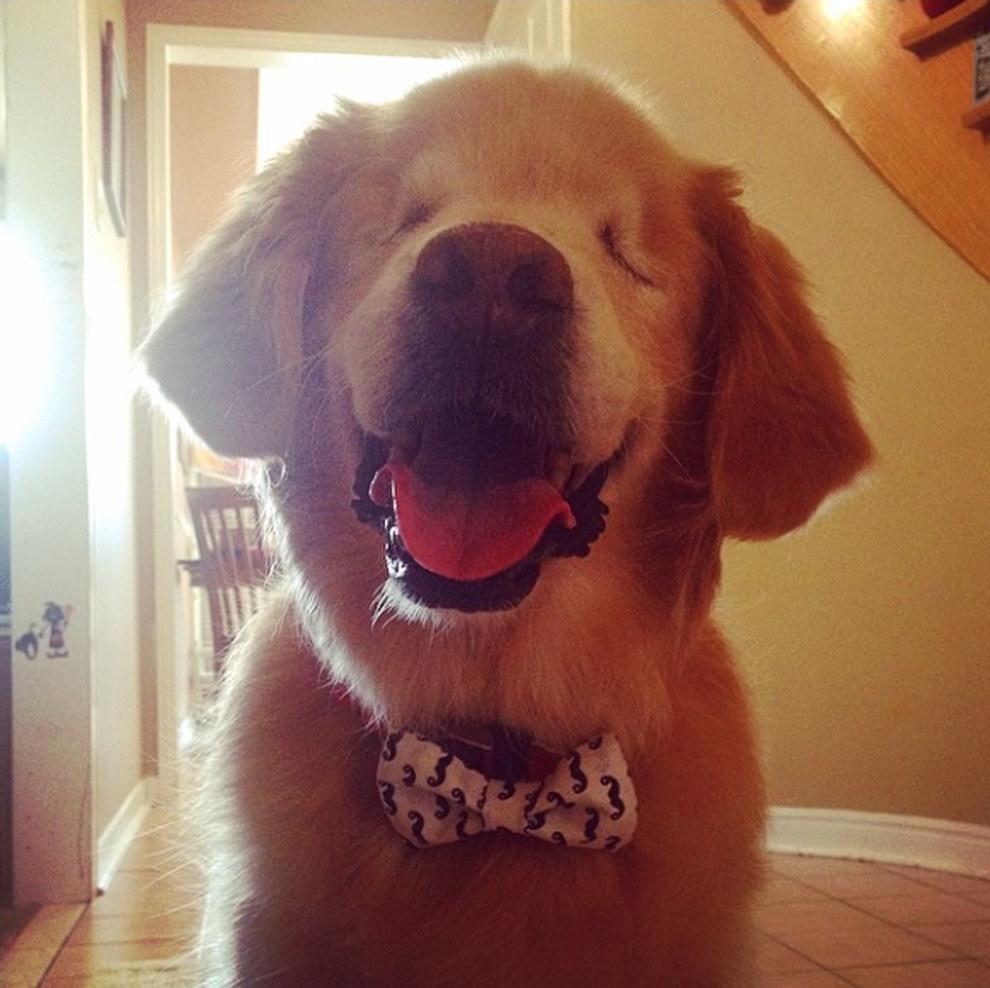 Perro terapeuta sin ojos se vuelve viral en Internet