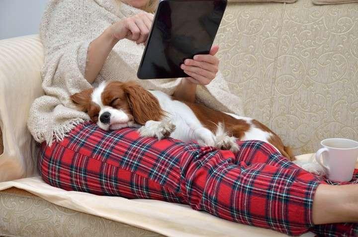 Mascotas de departamento: ¿qué debemos tener en cuenta?