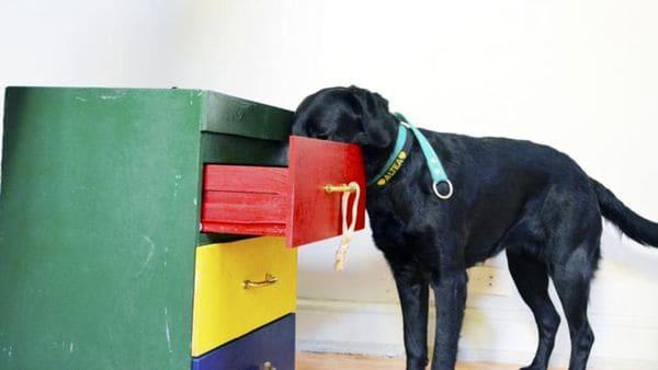 Durante el entrenamiento a un perro de asistencia aprende a sacar y dejar cosas de un cajón. (Bocalán)