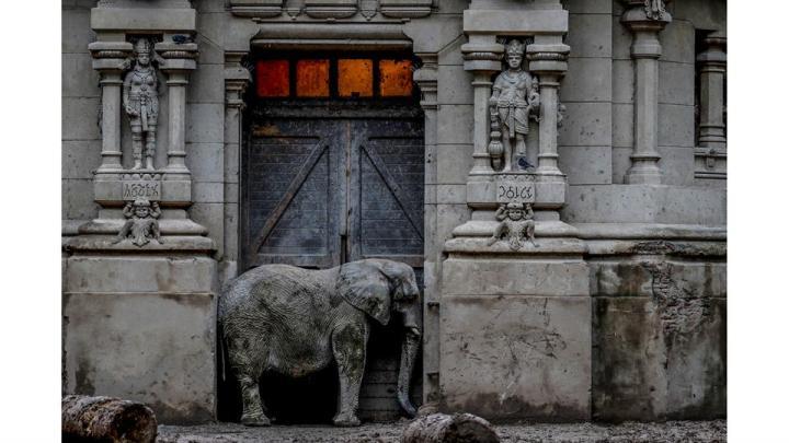 Pupy, un elefante africano, en la puerta de su recinto