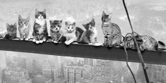 Resultado de imagen para AP Hallan 61 gatos en casa de Nueva York