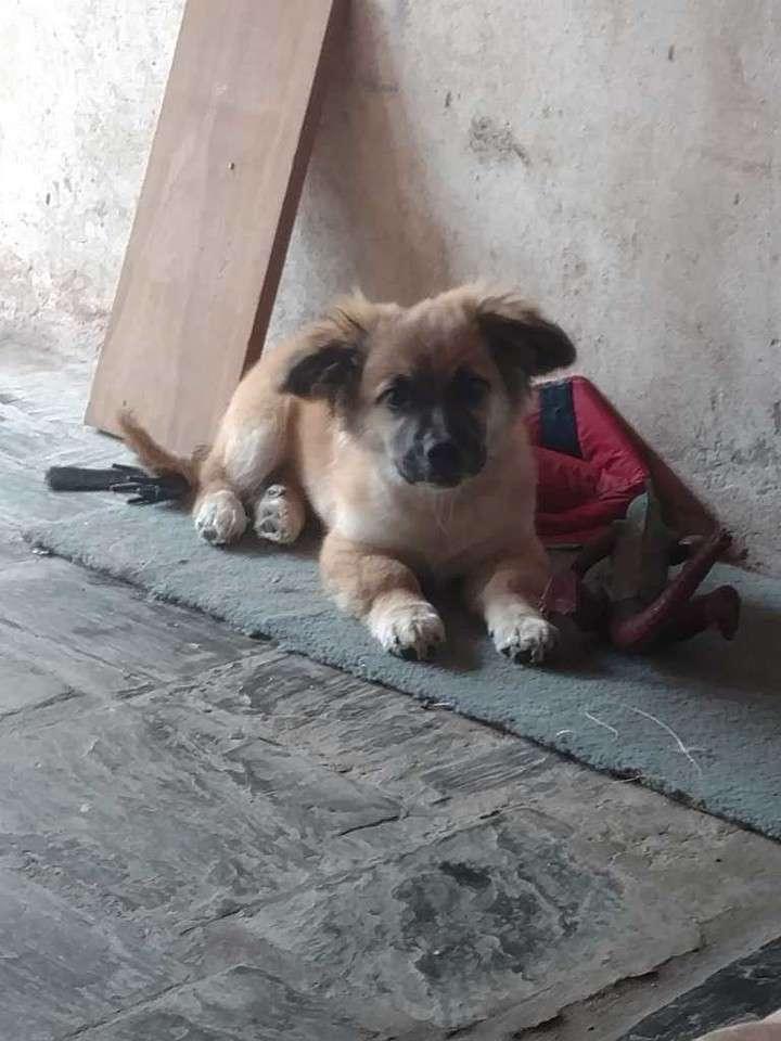 El instinto de un perro logró salvara un bebé abandonado en la calle