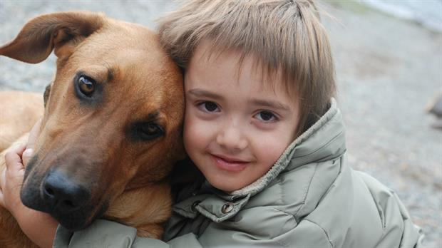 Día Internacional del Perro Callejero: 5 refugios para adoptar