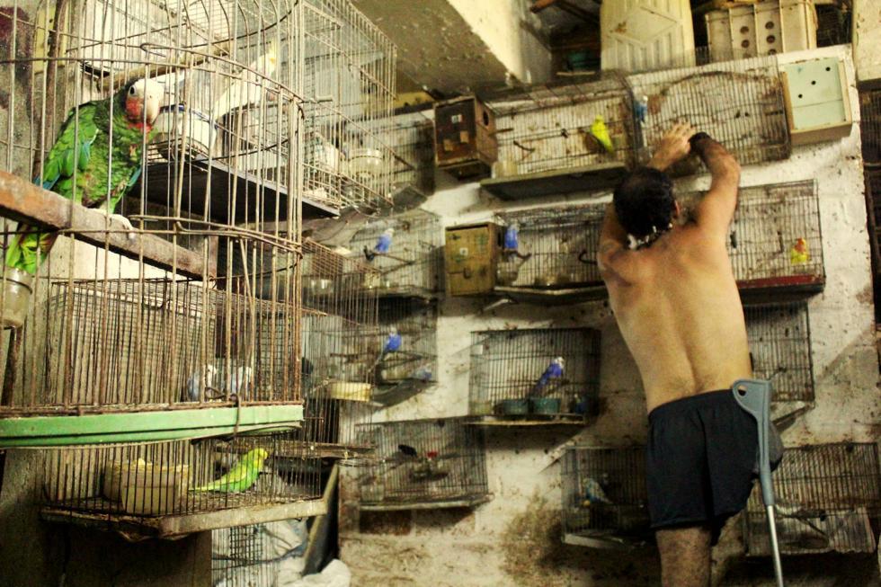 En la actualidad, Samuell vive solo con sus pájaros. La casa la compró su papá, pensando quizá que a él le apenaba tener una mujer dentro del hogar familiar, y por lo tanto, se privaba de ellas.