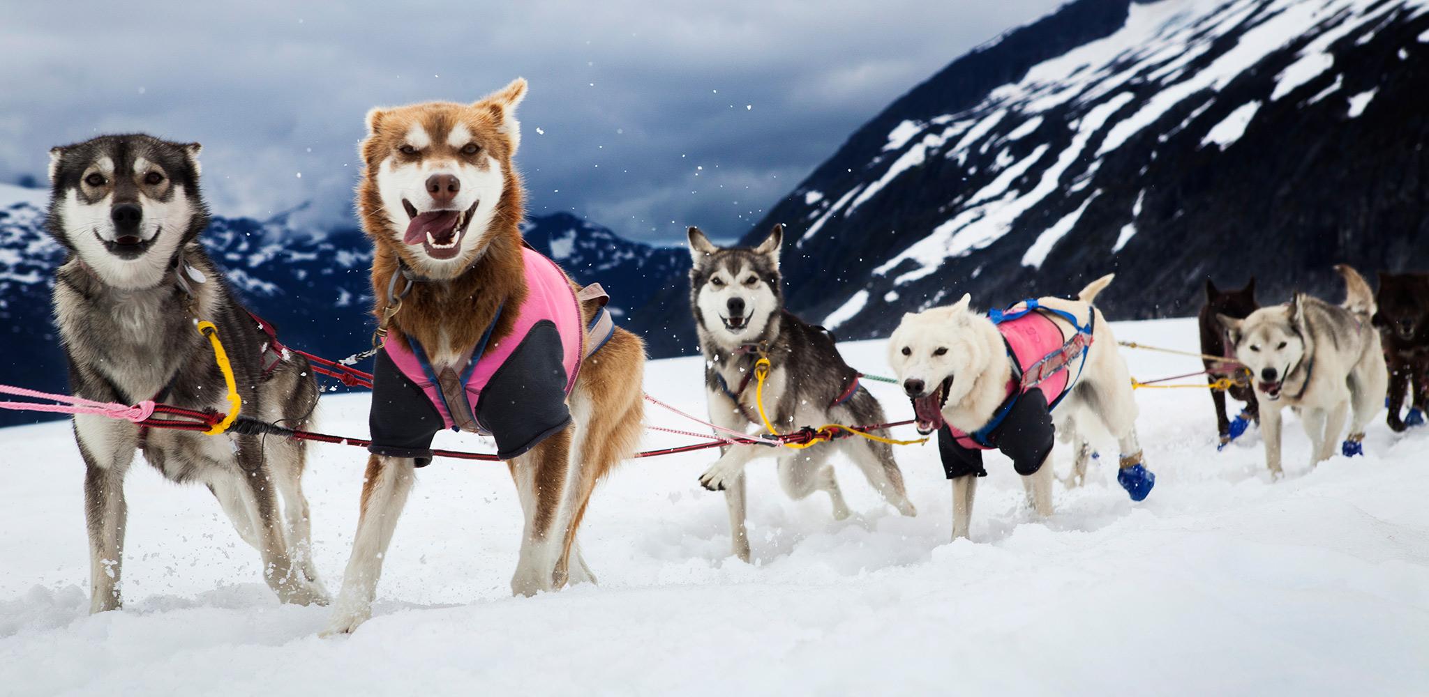 Escándalo en las carreras de trineos: un equipo de perros da positivo por opiáceos
