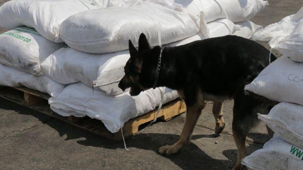 Un perro olfatea una carga en busca de cocaína (Foto: Natalio Cosoy/ BBC Mundo)