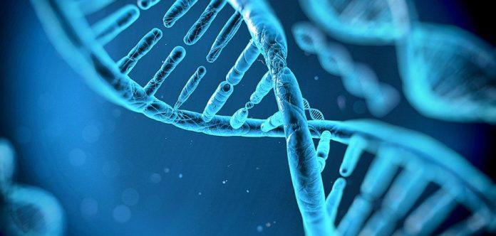 No a la modificación genética en los embriones humanos