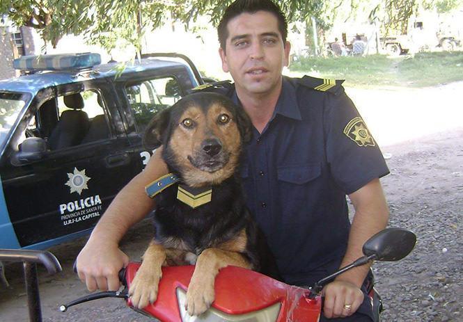 Argentina: abortistas le dan una paliza a un perro por las opiniones provida de su dueño