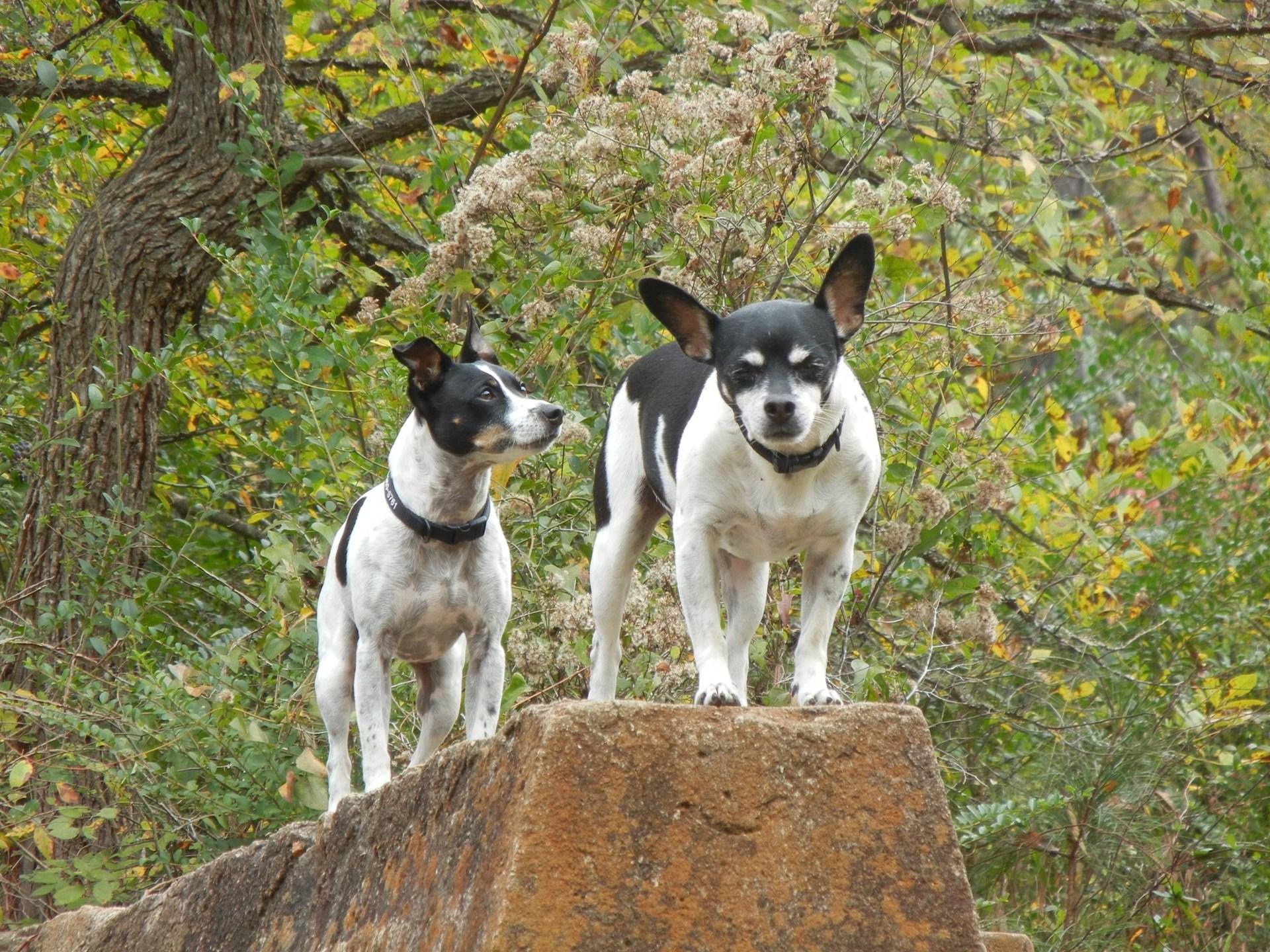 Por qué los perros nos hacen mejores personas