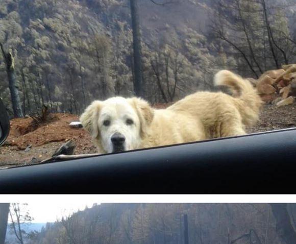 Este perro esperó un mes a sus dueños frente a una casa arrasada por