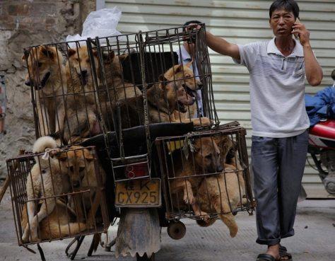 El festival de Yulin, este año, se inició el 21 de julio y se extenderá hasta el día 30.