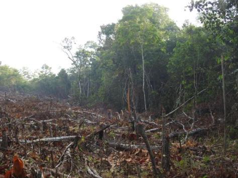 Deforestación en la Amazonia de Perú.