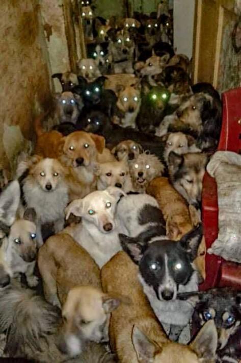 Perros callejeros rescatados aguardan el turno para que la ucraniana Ludmila les alimente en un refugio de Jerson, Ucrania. Foto Público