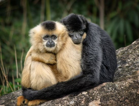 Monos dándose un abrazo