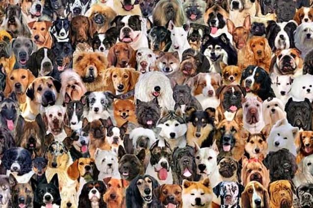 Día Mundial del Perro - Vet Market